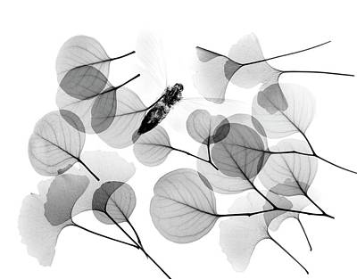 Animals And Insects Photograph - Insect And Plant Leaves by Albert Koetsier X-ray