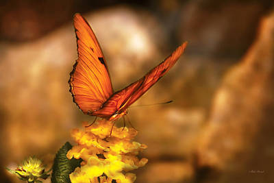 Butterfly Flowers Photograph - Insect - Butterfly - Just A Bit Of Orange  by Mike Savad
