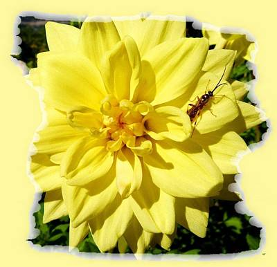 Insect On A Dahlia Art Print