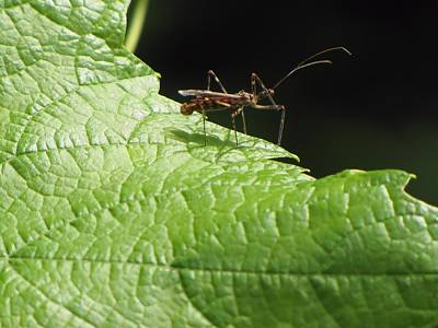 Photograph - Insect On Leaf by MTBobbins Photography