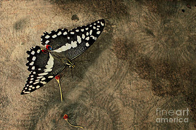 Insect Study Number 30 Art Print by Floyd Menezes