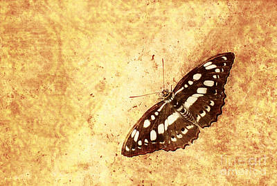 Insect Study Number 66 Art Print by Floyd Menezes