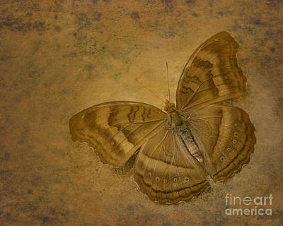 Insect Study Number 94 Art Print by Floyd Menezes