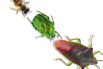 Photograph - Insects by Sigrid Gombert