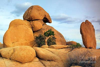 Photograph - Inselbergs In Joshua Tree by Charline Xia