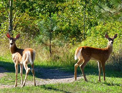 Early Autumn Photograph - Inseparable Twosome by Will Borden