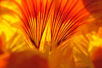 Photograph - Inside A Flower by Luis Esteves