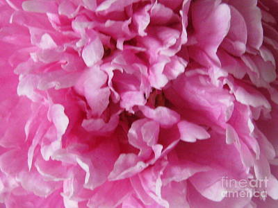 Art Print featuring the photograph Inside A Pink Peony by Margaret Newcomb