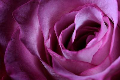 Photograph - Inside A Rose by Joe Kozlowski