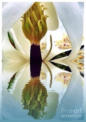 Photograph - Inside Magnolia Reflect  by Susan Garren