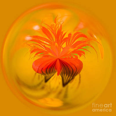 Manipulation Photograph - Inside Out Nasturtium by Anne Gilbert
