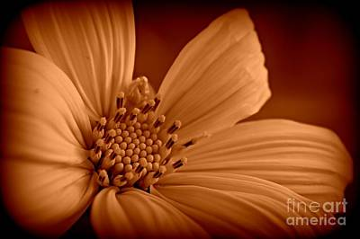 Sepia Flowers Photograph - Inside Sepia by Clare Bevan