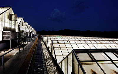 Photograph - Inside The Greenhouses Of Monsanto by Brent Stirton
