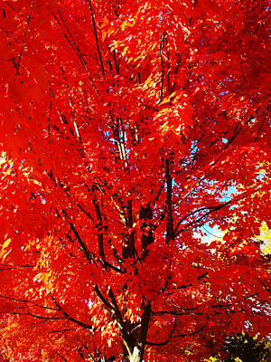 Photograph - Inside The Red Tree by Teri Schuster