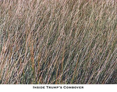 Inside Trump's Combover Art Print by Lorenzo Laiken