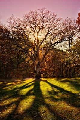 Cheekwood Photograph - Inspiration by Christopher  Carden