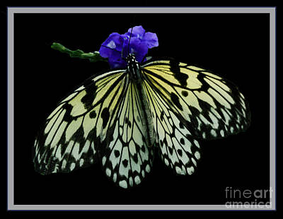 Inspired By Butterflies  Art Print by Inspired Nature Photography Fine Art Photography