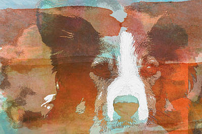 Photograph - Intense Border Collie -wc by Joye Ardyn Durham