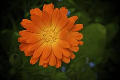 Photograph - Intense Orange by Terry Horstman