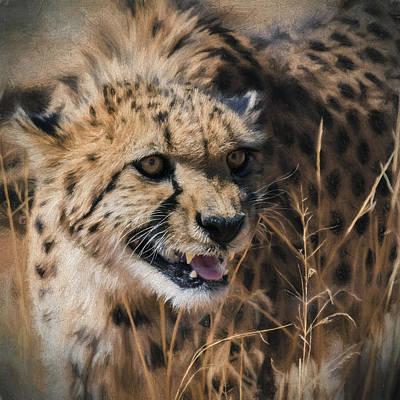 Intensity - Cheetah - Africa  Art Print by SharaLee Art