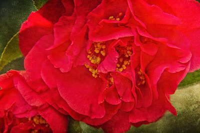 Camellia Photograph - Intensity by Jemmy Archer
