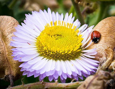 Ladybug Photograph - Interactions In Nature by Priya Ghose