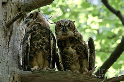 Owl Photograph - Interest by Cheryl Baxter