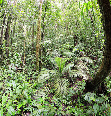 Amazon Rainforest Photograph - Interior Of Tropical Rainforest by Dr Morley Read