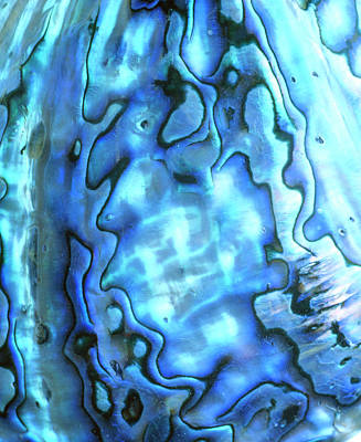 Abalone Wall Art - Photograph - Interior View Of An Abalone Shell by Simon Fraser/science Photo Library