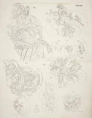 Internal Organs Art Print