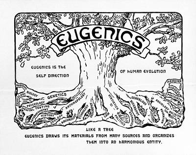 Tree Roots Photograph - International Eugenics Logo by American Philosophical Society