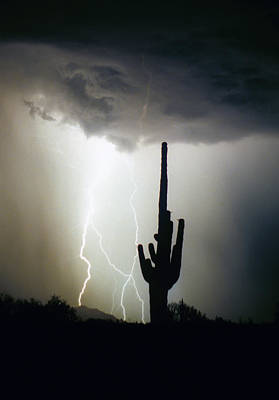 Striking-.com Photograph - Intertwine Lightning Bolts And Saguaro by James BO  Insogna