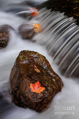 Gentle Cascades Photograph - Autumns Flow - A Semi Abstract by Thomas Schoeller