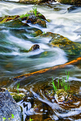 Lichen Photograph - Intimate With River by Elena Elisseeva