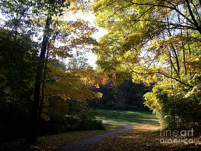 Photograph - Into His Light by Mel Steinhauer