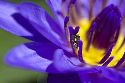 Photograph - Into The Blue by Priya Ghose