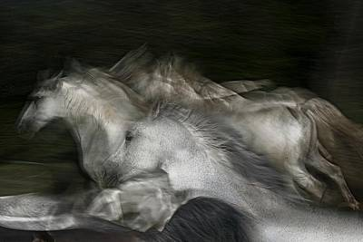 Running Horses Photograph - Into The Dark by Milan Malovrh