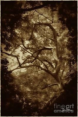 Into The Dark Wood Art Print