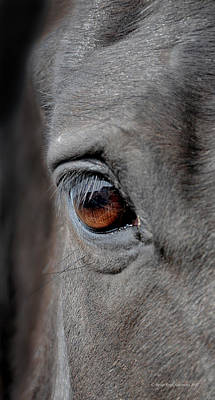 Horse Images Photograph - Into The Deep by Renee Forth-Fukumoto