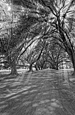 Into The Deep South Monochrome Art Print by Steve Harrington