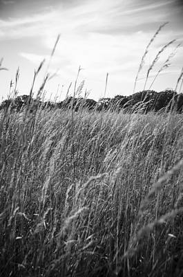 Photograph - Into The Field by Eric Miller