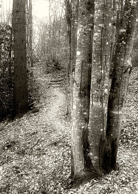 Wall Art - Photograph - Into The Forest by Daniel Amick