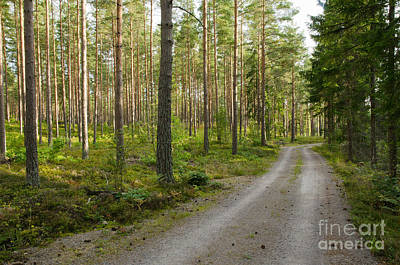 Photograph - Into The Forest by Kennerth and Birgitta Kullman