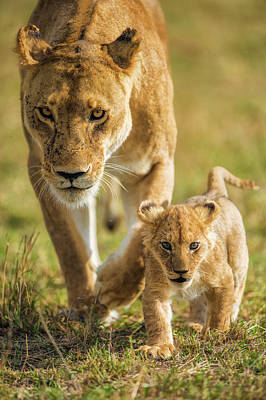 Cub Wall Art - Photograph - Into The Future by Mohammed Alnaser