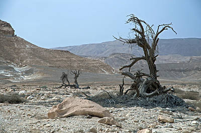 Photograph - Into The Israel Desert - 3 by Dubi Roman