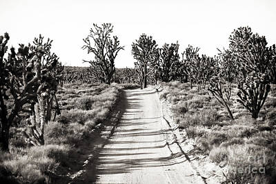 Photograph - Into The Joshua Tree Forest by John Rizzuto