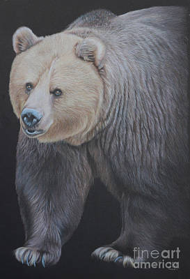 Endangered Drawing - Into The Light by Jill Parry