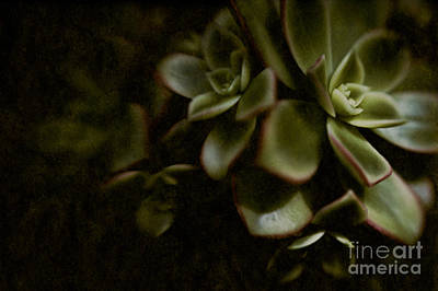Hens And Chicks Photograph - Into The Light by Venetta Archer