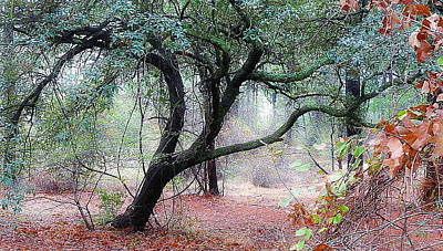Whalen Photograph - Into The Mist by Jim Whalen