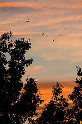 Flock Of Bird Photograph - Into The Night - Sunsets by SharaLee Art